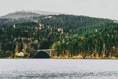 在湖的Forrest 免版税库存图片