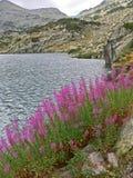 在湖背景的山紫色花 免版税库存图片
