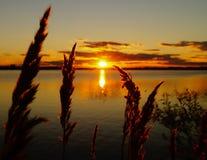 在湖背景的金黄日落 图库摄影