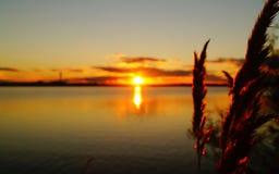 在湖背景的金黄日落 免版税库存照片