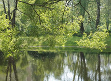 在湖背景的绿色树 图库摄影
