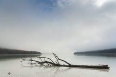 在湖表面的停止的结构树 免版税库存照片