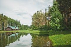 在湖装饰的美丽的俄国桦树丛林9292 库存照片
