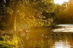 在湖边的一个结构树在日落 免版税图库摄影