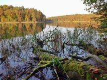 在湖边的下落的青苔隐蔽的树干 库存照片