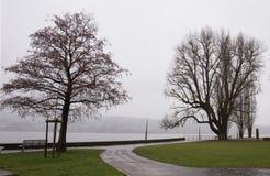 在湖边的冬日 库存图片