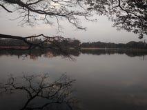 在湖边的干燥冬天 免版税库存照片