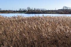 在湖边的干草领域晚冬 库存照片