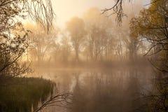 在湖边的平静的有薄雾的早晨 免版税库存图片