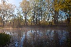 在湖边的平静的有薄雾的早晨 免版税库存照片