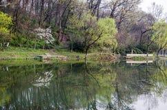 在湖边的春天 库存图片