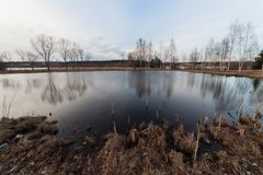 在湖边的树 库存照片
