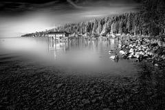 在湖边的树 库存图片