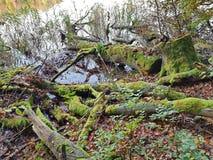 在湖边的青苔隐蔽的树干 免版税库存图片