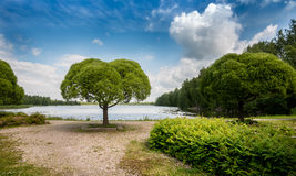 在湖边的绿色叶子树 免版税库存照片