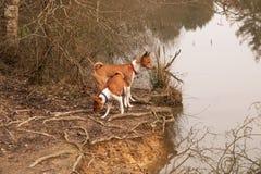 在湖边缘的狗  图库摄影