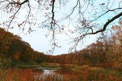 在湖边缘的秋天 免版税库存图片