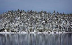 在湖边缘的积雪的树 免版税库存图片