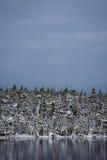 在湖边缘的积雪的树 库存图片
