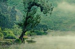 在湖边缘的龙血树 免版税库存图片