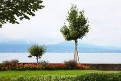 在湖边,洛桑的树 免版税库存图片