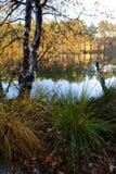 在湖银行的黄色秋天木头  免版税库存照片