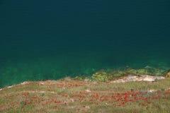 在湖阿萨德-叙利亚的鸦片花 库存照片