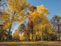 在湖阿讷西边缘的秋季树  免版税库存照片