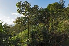 在湖阿雷纳尔上的风景La的福尔图纳,哥斯达黎加 免版税库存照片
