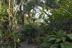 在湖阿雷纳尔上的风景La的福尔图纳,哥斯达黎加 库存照片