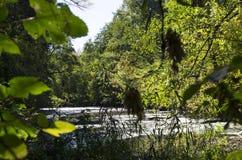 在湖附近的丛林 免版税库存图片