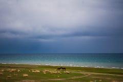 在湖附近的两匹马 在背景的深蓝天 库存图片