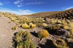 在湖附近的典型的安地斯山的沙漠植被在清早l下 库存照片