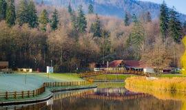 在湖附近的斯诺伊树荫 免版税库存图片