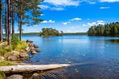 在湖附近的杉木森林 免版税库存图片