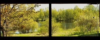 在湖附近的树一个黑框架的 免版税库存照片