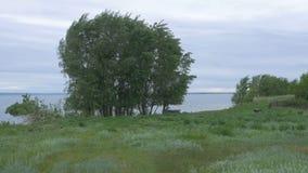 在湖附近的树在日落期间 自然美好的横向 树自然风景和湖背景 库存照片
