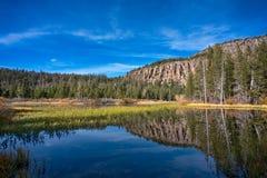 在湖附近的树在马麦斯湖,加利福尼亚 免版税库存照片