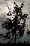 在湖附近的树日出的 库存图片