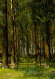 在湖附近的森林道路 库存图片