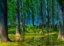 在湖附近的森林道路 库存照片