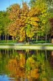 在湖附近的秋天结构树 免版税库存图片