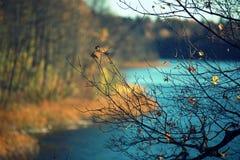 在湖附近的秋天 免版税库存照片
