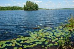 在湖附近的绿叶 库存照片