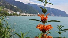 在湖附近的花 库存照片