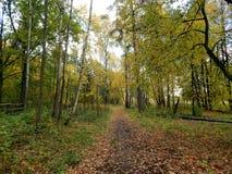 在湖附近的金黄公园秋天时间的 库存照片
