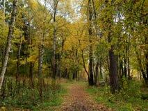 在湖附近的金黄公园秋天时间的 免版税库存照片