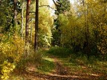 在湖附近的金黄公园秋天时间的 库存图片
