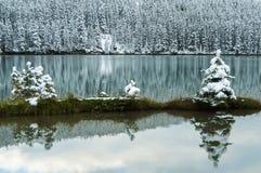 在湖附近的雪盖杉木 免版税库存图片