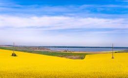 在湖附近的黄色领域 免版税库存照片